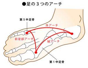 足のアーチ構造の画像